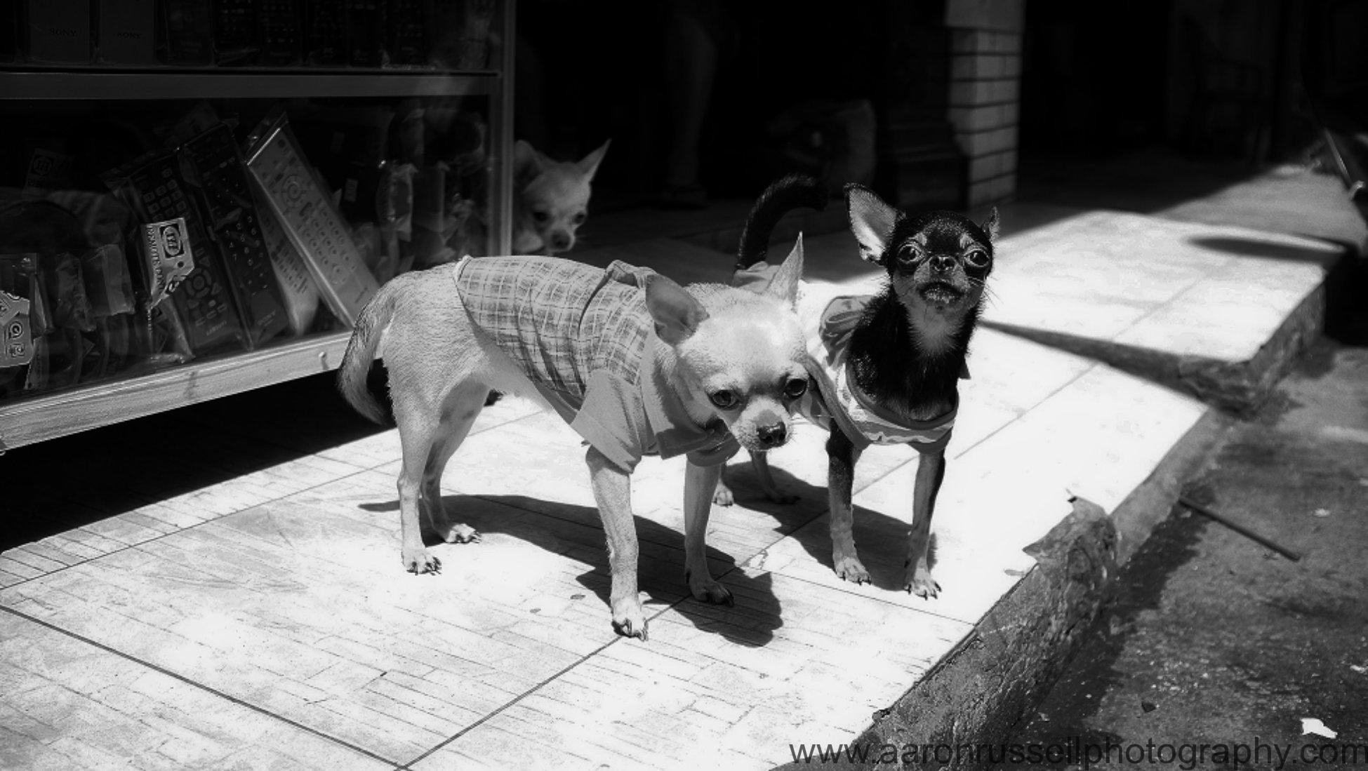 wpid new chijouja s saigon Saigon dogs